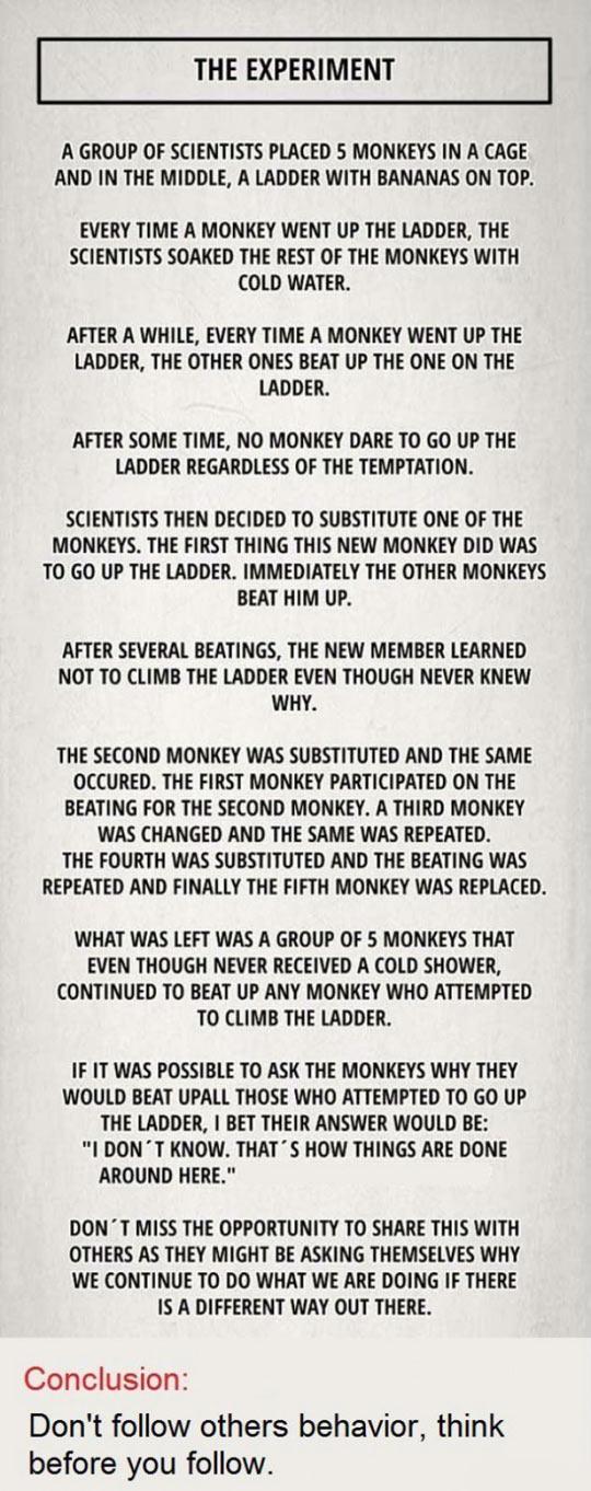 funny-banana-experiment-lesson-monkeys