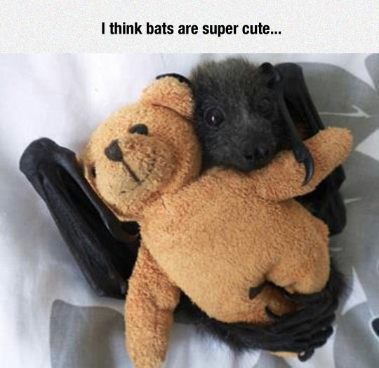 funny-bat-Teddy-bear-cute