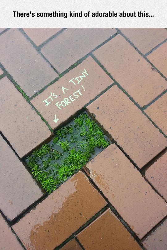 funny-brick-floor-green-plant