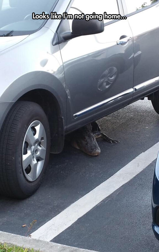 funny-car-alligator-danger-parking