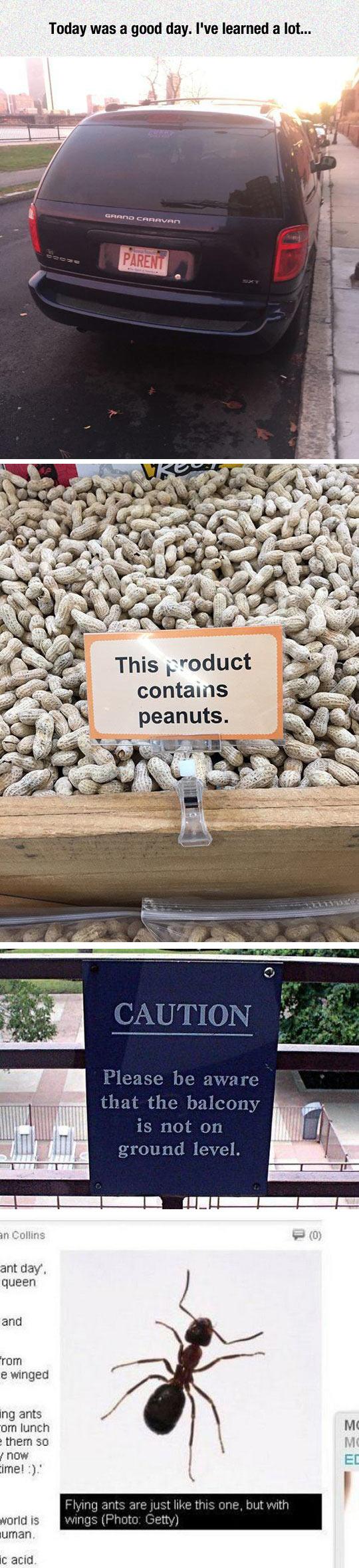 funny-car-name-sing-peanut