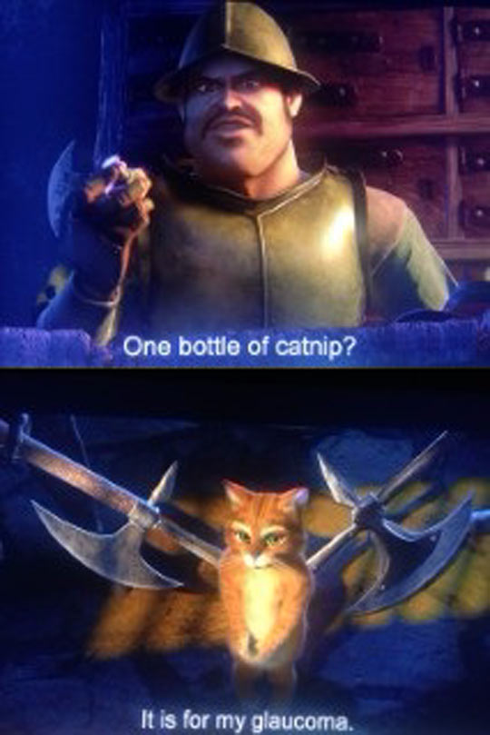 funny-cat-Boots-catnip-soldier