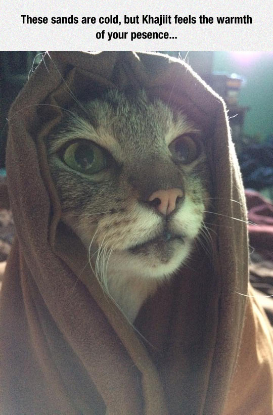 Cat In Funny Costume