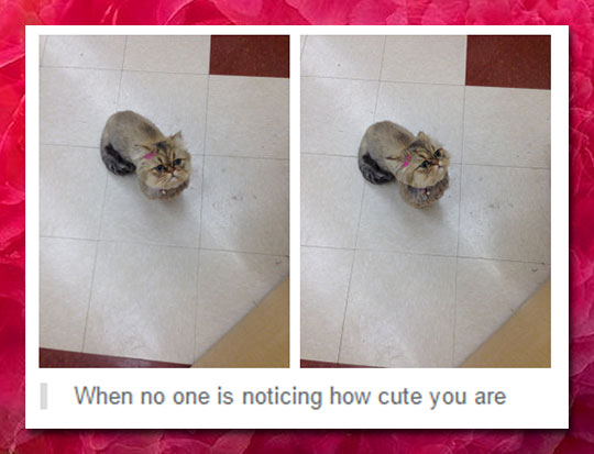 funny-cat-bow-cute-comment