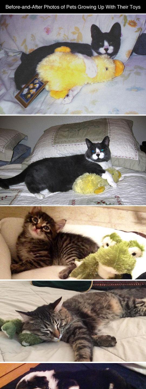 funny-cat-dog-pet-toys