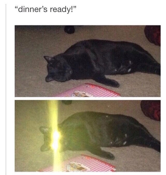 Cat Of Ultron