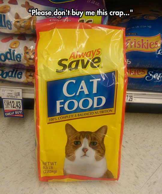 funny-cat-face-bag-food