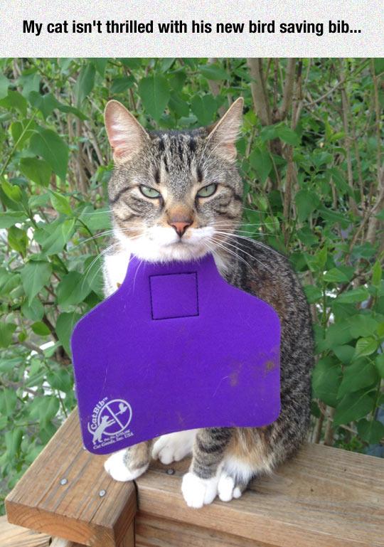 funny-cat-face-bird-saving-bib