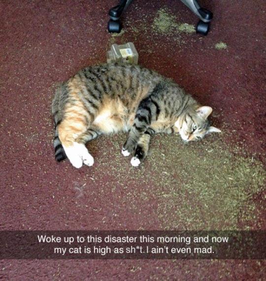 funny-cat-floor-cat-nip