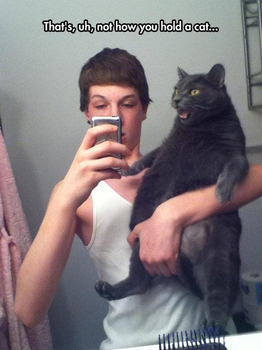 funny-cat-kid-grabbing-wrong