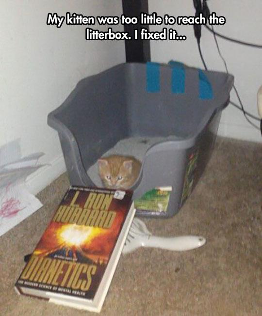 funny-cat-litterbox-Dianetics-book