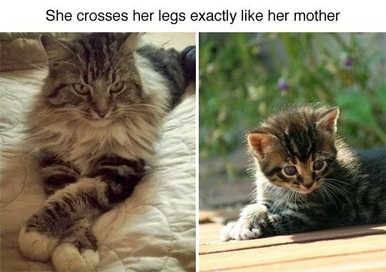 funny-cat-mother-daughter-paws-cross
