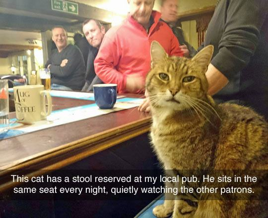 funny-cat-sits-bar-stool-reserved-1