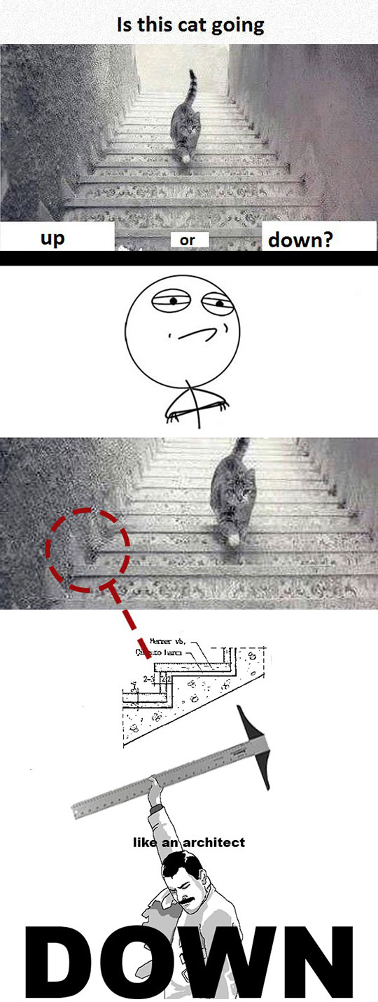 funny-cat-stairs-shape-architect
