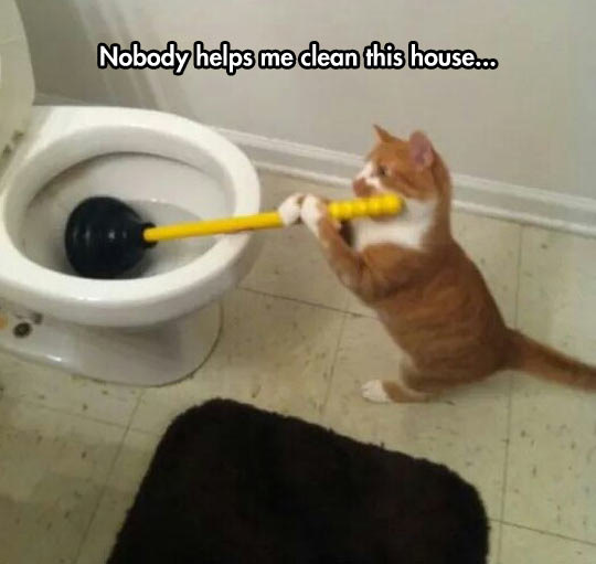 Cat Taking Care Of The House Maintenance