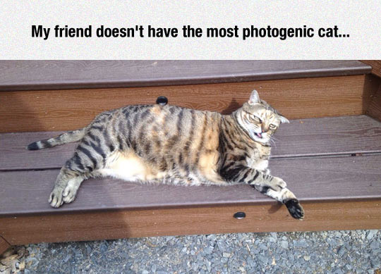 funny-cat-ugly-face-lay-down