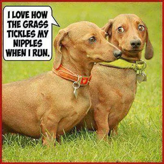 funny-dog-awkward-starring-grass