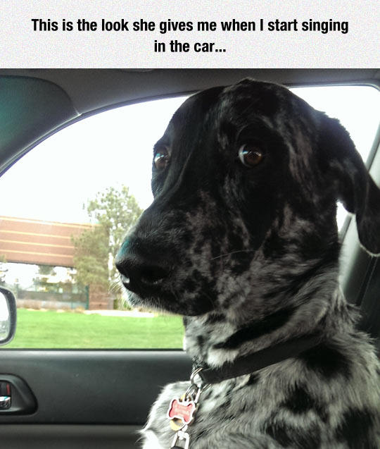 funny-dog-car-looking-staring