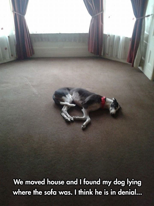 funny-dog-empty-room-floor