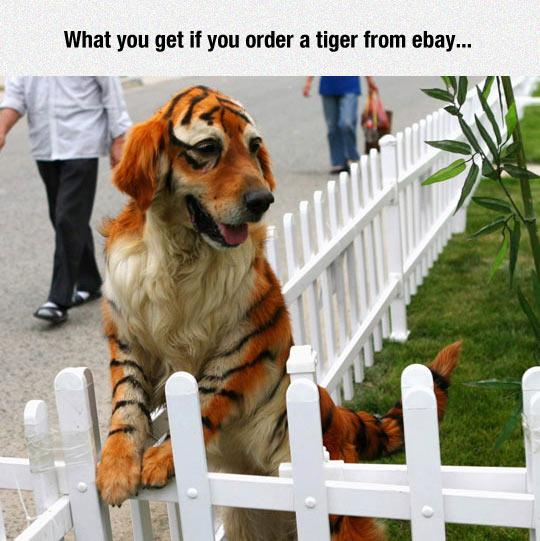 funny-dog-fence-painted-stripes-black