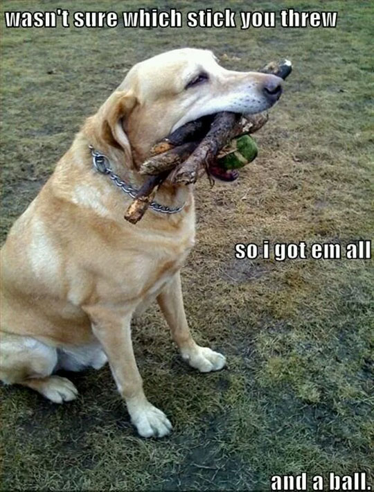 The Retriever Is Strong With This One