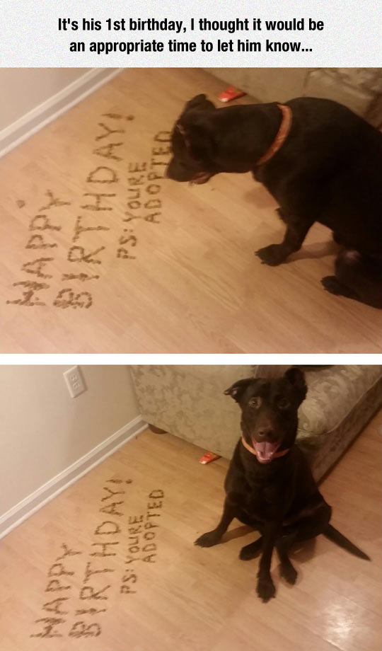 funny-dog-food-birthday-news-adopted