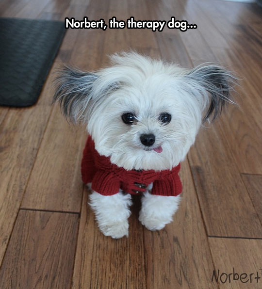 funny-dog-pet-toy-cute-therapy