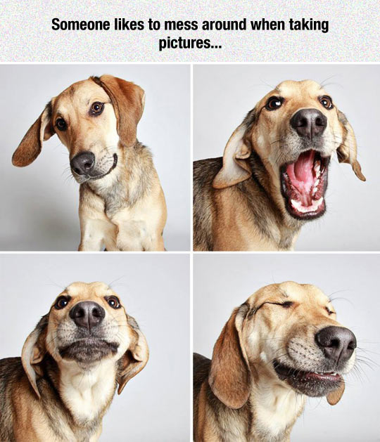funny-dog-pictures-face-happy