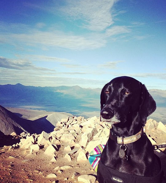 funny-dog-thinking-looking-landscape