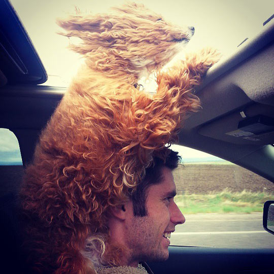 funny-dog-window-car-wind-happy