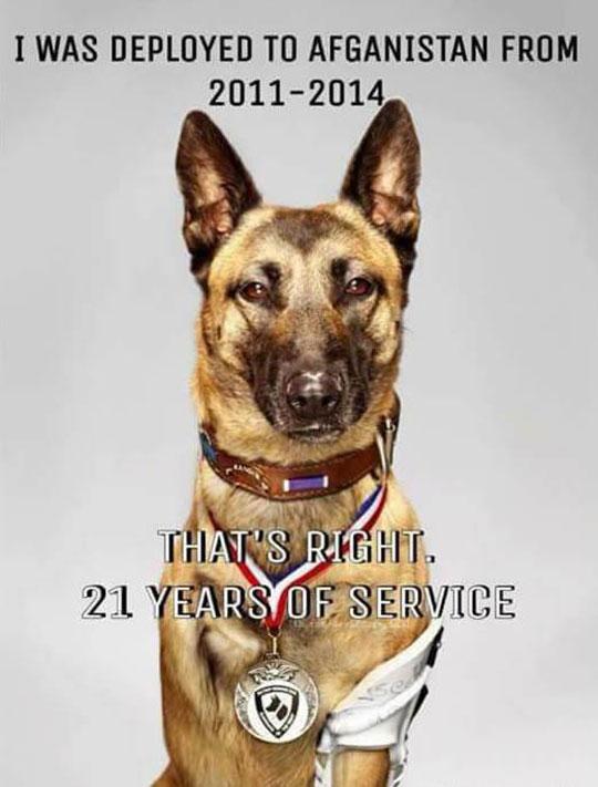 A True Dog Hero