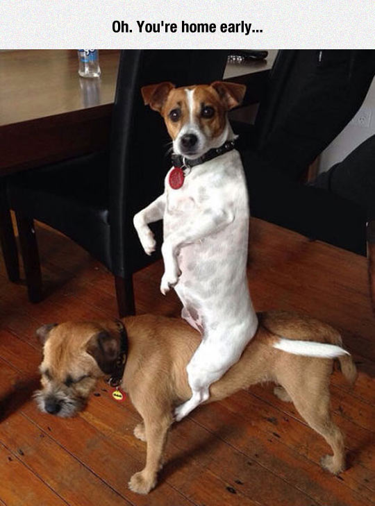 That Dog Has Balance