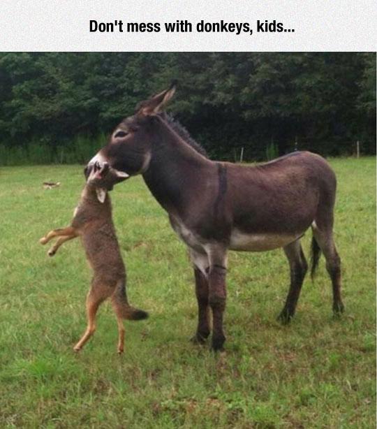 funny-donkey-fox-farm-attack
