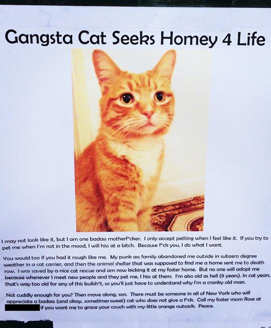 The Gangsta Cat