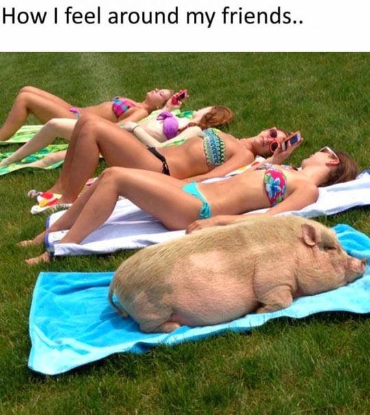 funny-girls-sun-bath-pig-sleeping