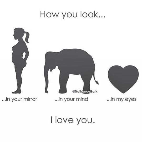 funny-looking-mirror-elephant-love