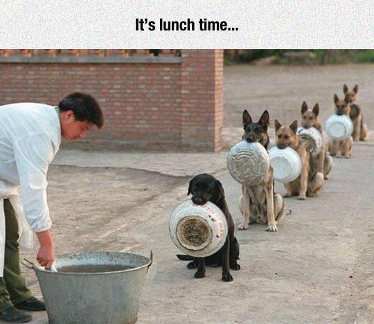 funny-lunch-time-dogs-food