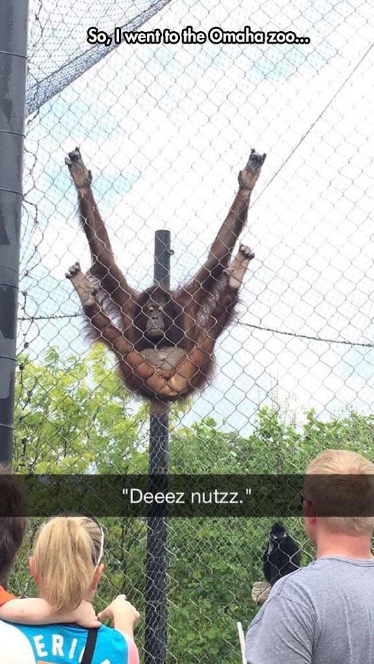 funny-monkey-hanging-fence