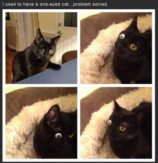 One-Eyed Cat Problem Solved