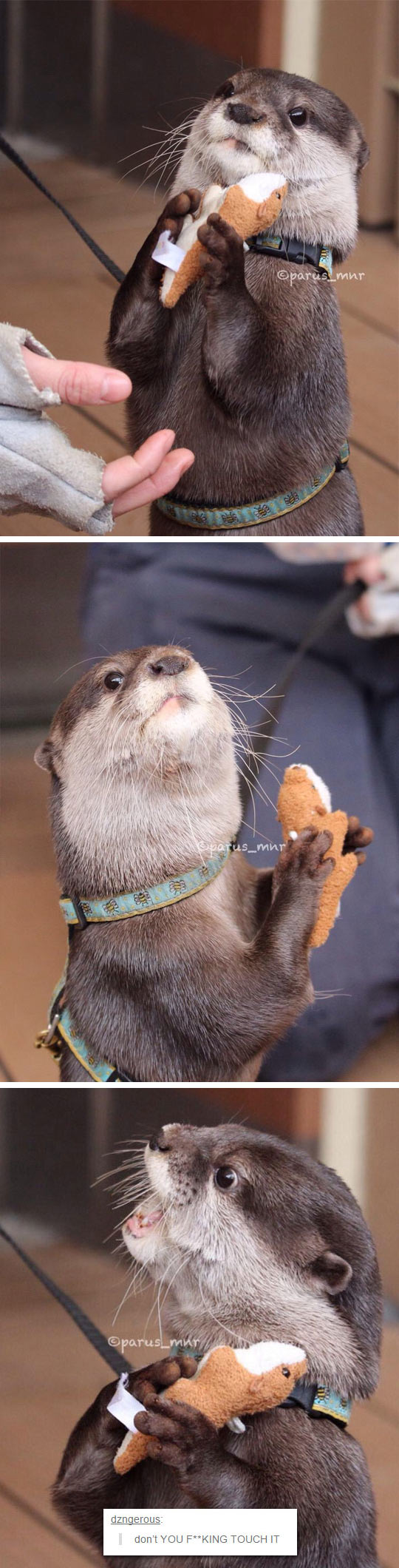 funny-otter-playing-toy-angry
