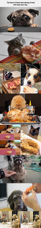 Pets Staring At Food