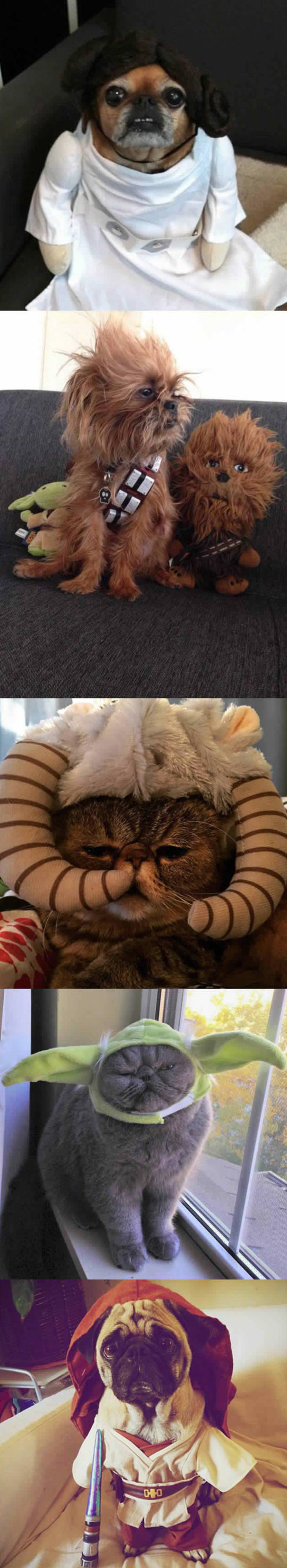 funny-pets-dressed-Star-Wars-Yoda