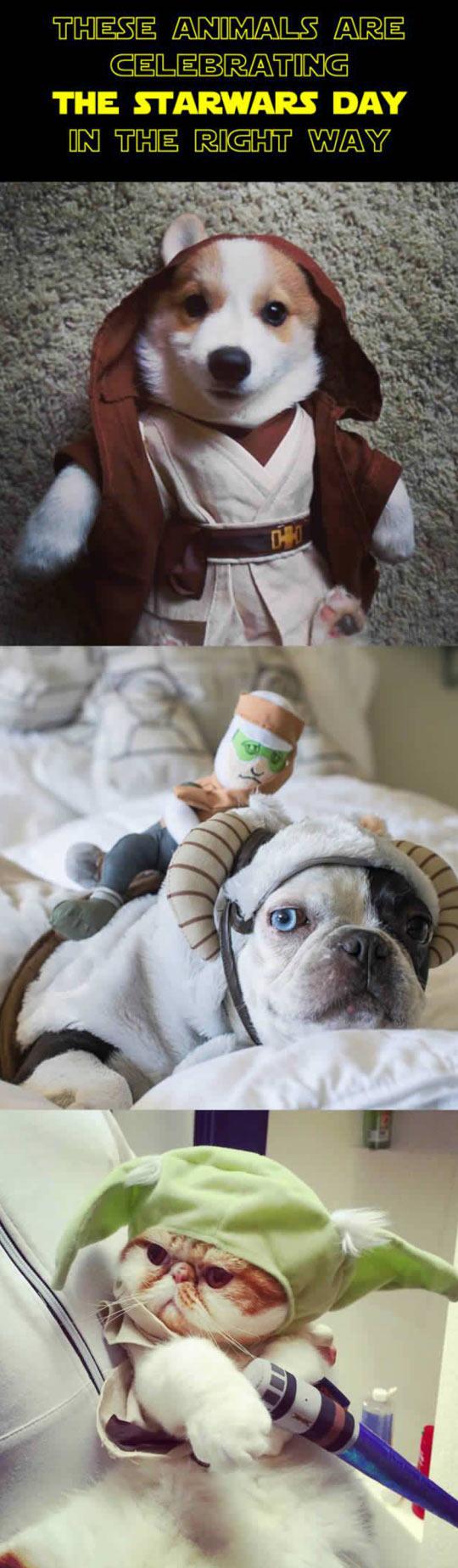 Animals Celebrating The Star Wars Day