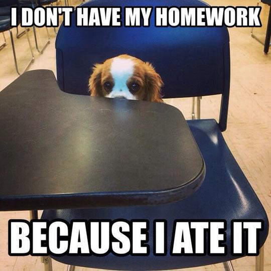 Shamed School Puppy