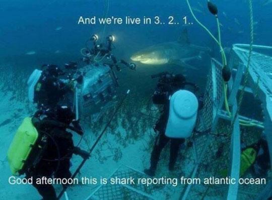 Meanwhile In Sea NN