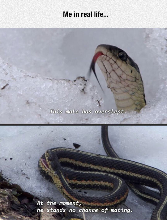 funny-snake-sleeping-snow-mating