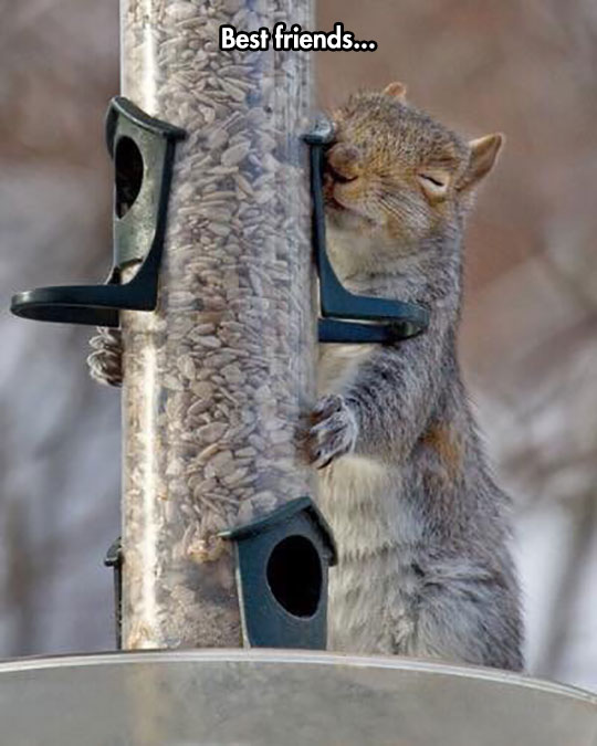 funny-squirrel-hugging-feeder
