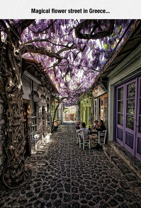funny-street-flower-shade-tree-purple