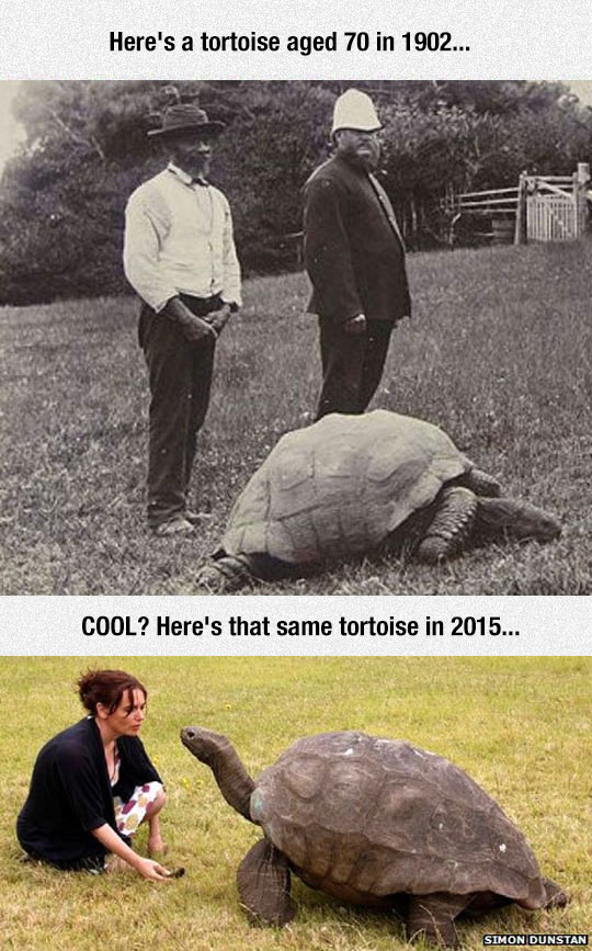 funny-tortoise-old-picture-age-animal
