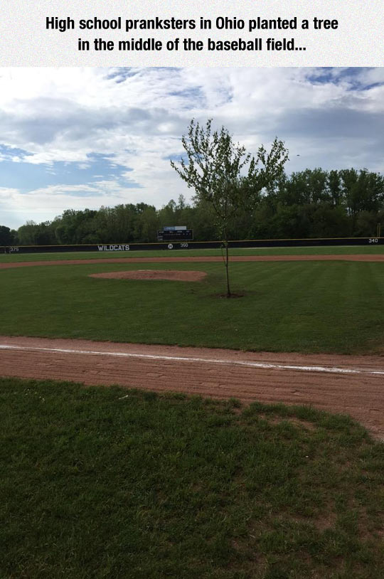 funny-tree-baseball-field-Ohio-prank